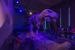 Tyrannosaurus Rex Robot