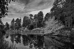 Bedgebury Pinetum--10 (RevCheck Photography) Tags: tree trees pine autumn fall season colour red orange yellow green nature wild outside outdoors explore exploring natural beauty stunning landscape sky clouds river lake water scenery canon eos 6d ef24105mm f4l is usm black white bw