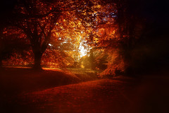Sunset and the trees ... (Julie Greg) Tags: autumn autumn2018 park tree trees canon colours sunset sun light motepark forest road sky