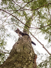 What're You Doing Down There? (TangerinesDreamFinds) Tags: cat kitten tabby tiger tree climb climbing winter pine