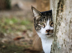 cat (Christine_S.) Tags: cat japan straycat canon nature ネコ