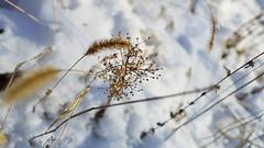 30087090 (aniaerm) Tags: snow ice frost