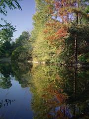 1379 (amansjeanphilippe) Tags: carlzeiss rollei sinar hy6 distagont450 fle amansjeanphilippe landescape paysage reflet autumn automne paris boisdeboulogne