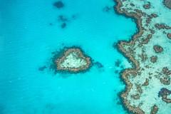 heart reef (Rafael Zenon Wagner) Tags: reef korallen herz korallenmeer türkis blau paradies nikon d810 greatbarrierreef corals heart coralsea turquoise blue paradise
