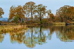 end of the road (marneejill) Tags: nanaimo estuary trees fall autumn reflections