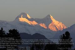 Nanda Devi (Kapaliadiyar) Tags: kapaliadiyar nandadevi kumaon chaukori uttarakhand sunandadevi nandadevieast garhwalpeaks himalayanpeaks 23rdhighestindependentpeakintheworld kmvn pithoragarhdistrict