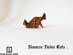 Siamese Twins Cats - Barth Dunkan. (Magic Fingaz) Tags: barthdunkancatchatgatokittenorigamiorigamicatgatto kedi kočka kot kucing mačka paperfolding γάτα кіт мачка ネコ猫