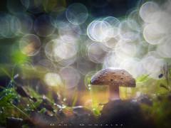 Mundo burbujeante (www.studio360fotografia.es) Tags: olympus em10 omd pentacon 80mm 28 proyector projector bokeh desenfoque colores colors nature naturaleza seta mushroom fungi fantasy fantasia burbujas