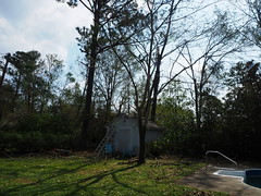 P9200876 (photos-by-sherm) Tags: hurricane florence recovery wilmington nc debris pine trees cuttings chain sawing yards valley fall