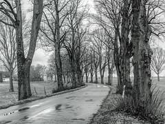 Rund um Zons / März 2016 - sw (KL57Foto) Tags: zons rheinland nrw nordrheinwestfalen deutschland am rhein kl57foto olympus pen epm2 stadt zonsamrhein stadtzons stadtzonsamrhein germany rhineland landschaft märz 2016 landscape dormagen landstrase sw bw schwarzweis blackwhite