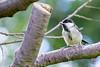 Garden Bird-1221