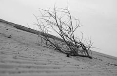 Strandgut (jan-ruehmann@t-online.de) Tags: norddeutschland küste nature schleswigholstein ruhe natur strand beach sand landscape sea langeoog nordsee