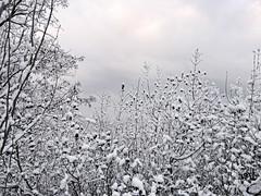 89339966 (aniaerm) Tags: snow ice frost