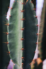 The Thorns (Octal Photo) Tags: 500px full frame extreme close up pattern abstract wire mesh twig textured effect leaf ice crystal vein icicle grooved circular fractal colorful cactus thorns nature the
