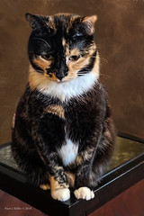 My Cat Autumn (jackalope22) Tags: autumn cat 5yr 65yr happy scatsurday happyscatsurday