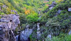 Landscapes of the soul( 3): balance//Paisajes del alma(3): equlibrio (PURIFM) Tags: landscape ngc niko paisaje bosque forest autumn mountain colors nature plants tree green
