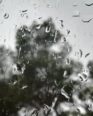 El sonido de la lluvia no necesita traducción 💧️ #frasesnaturaleza #lluvia #lluvia☔ #Frases #gotas #ventana #naturaleza #fotosnaturaleza (PhotoPhernan) Tags: ventana frases lluvia fotosnaturaleza gotas naturaleza frasesnaturaleza