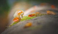 Mushroom (Dhina A) Tags: sony a7rii ilce7rm2 a7r2 a7r fe 24105mm f4 sonyfe24105mmf4 zoom lens bokeh sharp sel24105g