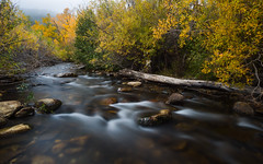 Huerfano River Autumn (Christopher J May) Tags: co colorado huerfanoriver nikond800 tamronsp2040mmf2735 autumn bushes color cottoncandywater fall foliage landscape river trees