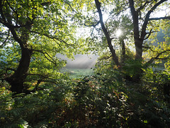 Sunbeams. (dave p brecks) Tags: forestscenes olympus918 olympusem10markii sunbeams nature autumnmorning framed