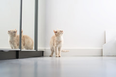 dog-cat (sarapoppel@t-online.de) Tags: cat cats kittens kitten kitty of love funny pets cute catlover juliusandcesar animals animal pet dog dogs photooftheday animales nature animallovers