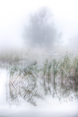 (Topolino70) Tags: canon600d reed shore lake mist fog tree bright