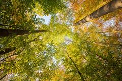 Herbst in den Baumwipfeln (lichtschacht-kiel) Tags: autumn herbst colors wald fuji