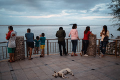 * (Sakulchai Sikitikul) Tags: street snap streetphotography summicron songkhla sony 35mm leica seascape sea dog thailand a7s