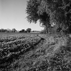 Distagon 50mm (salparadise666) Tags: rolleiflex sl66 distagon 50mm rollei retro 80s boxspeed caffenol cl 30min nils volkmer vintage slr medium format 6x6 analogue film camera landscape rural north german plains lowlands lower saxony germany hannover region square bw black white monochrome