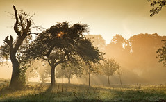 Awakening (Rita Eberle-Wessner) Tags: landscape landschaft bäume trees sonnenaufgang sunrise sonnenstrahlen sunbeams runrays tyndalleffect nebel fog morgen morning blendensterne sonnensterne tau dew morningdew apfelbäume streuobstwiese obstbäume appletrees golden gold licht light odenwald atmosphere atmosphäre stimmung morgenstimmung enchanted wiese meadow grass gras autumn