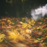 284/365 - A weariness of leaves thumbnail