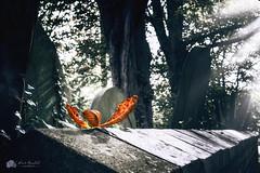 Balance.. (Kerriemeister) Tags: autumn cemetery spooky halloween leaf balance colour pop nikond5300 bokeh sunrays