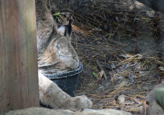 Get the Edges (MTSOfan) Tags: eat eating food meal bowl canadalynx lvz
