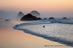 Blue Hour Special (Gary Grossman) Tags: sunset gloaming dusk shore beach pacific oregon gull ocean seagull bird reflection landscape seascape northwest garygrossmanphotography landscapephotography pacificnorthwest pacificocean oregoncoast seashore surf cannonbeach seastacks
