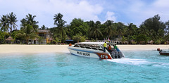 Arrival by speedboat on the southernmost island Koh Lipe of Thailand (B℮n) Tags: kolipe kohlipe เกาะหลีเป๊ะ kohlippy adangrawi archipelago ploysiam speedboat national park kohturatao koturatao kohlipeh nationalparkkohtarutao tarutao bounty island thailand anadamansea sandy beach pakbara marinepark snorkling adang rawi tourism vacation holiday coral reef tropical fish nemo protectedarea chaolay chaoley boat palmtree coconuts crystal clear water seawater siam seagypsies longtail nature reserve province satun blue cyan thai e 50faves topf50