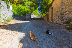 Cats on the streets of Cefalu (tomikaro) Tags: sicily palermo agrigento scopello cefalu italy vacation trip erice trapani