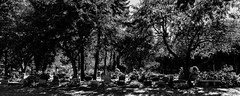 Montréal sept-2018-09 (Agirard) Tags: cemetery montroyal bw nb blackwhite street urban park montreal quebec canada flowers graves trees sony a7ii loxia loxia35 235mm zeiss