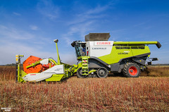 Buckwheat Harvest | CLAAS (martin_king.photo) Tags: harvest harvest2018 ernte 2018harvestseason combineharvester combine harvester new modernmachine powerfull martin king photo machines strong agricultural great czechrepublic agriculturalmachinery farm working modernagriculture landwirtschaft martinkingphoto moisson machine machinery field huge big sky agriculture power dynastyphotography lukaskralphotocz day fans work place yellow gold golden eos country lens rural camera outdoors outdoor colours fields claaslexion autumn autumnharvest claaslexion780 terratrac flagship buckwheat buckwheatharvest