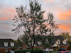 Tree And Sky At The Apartment Complex. (dccradio) Tags: lumberton nc northcarolina robesoncounty outdoor outdoors outside thursday evening autumn fall goodevening nature natural leaf leaves sky pinksky eveningsky tree trees treebranch branch branches treebranches foliage clouds treelimbs treelimb building architecture apartments apartment apartmentbuilding parking parkinglot car canon powershot elph 520hs