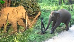 Elephants vs. Electric Fences. Amazing Intelligent Animals (THE WILD ELEPHANT) Tags: huge elephant rescue video youtube quite baby funny kids videos the wild wildlife news tv
