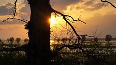 *** (pszcz9) Tags: drzewo tree zachódsłońca sunset pejzaż landscape słońce sun woda water wiosna spring beautifulearth sony a77