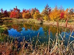 Sunny afternoon (Tobi_2008) Tags: teich pond herbst autumn landscape landschaft natur nature sachsen saxony deutschland germany allemagne germania