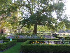Wingnut tree in the Rijksmuseum garden (dlge) Tags: netherlands amsterdam wingnut rijksmuseum