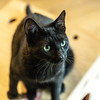 Javacats14Oct2018302.jpg
