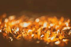 still running even in my dreams... (_elusive_mind_) Tags: nature minimalism light licht leaves autumn