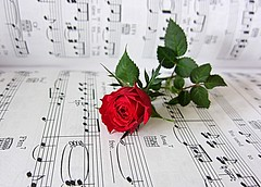 rose and music (majka44) Tags: red rose flower music art picture 2018 day light romance