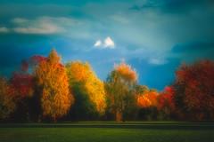 The Autumn Park (Julie Greg) Tags: park colours nature nautre sky clouds tree trees leaf leafs grass landscape england kent
