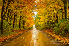 Driving through the Superior National forest (susannevonschroeder) Tags: minnesota fall forest golden magic northshore road trees