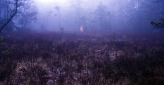 run in the woods (gormjarl) Tags: bronseplassen wood running høvåg lillesand norway shamanism