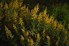 DSC06025 (@saka) Tags: autoupload flowers 73337359 leaves 10791083 street 634637